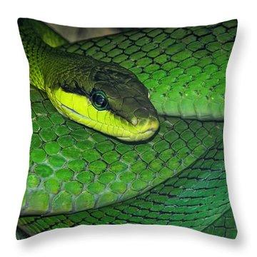 Green Viper Throw Pillow by Joachim G Pinkawa
