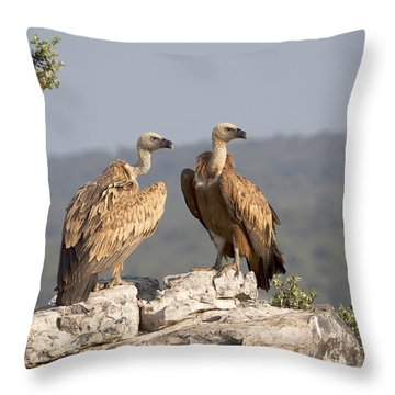 Griffon Vulture Pair Extremadura Spain Throw Pillow by Gerard de Hoog