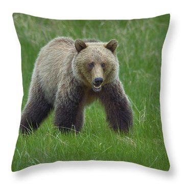 Grizzly Throw Pillow by Tony Beck