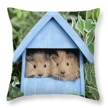Guinea Pig In House Gp104 Throw Pillow by Greg Cuddiford