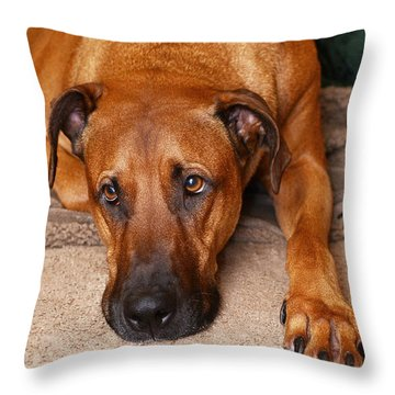 Guinness Throw Pillow by Lisa Phillips