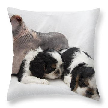 Hanging With The Dogs Throw Pillow by Jeannette Hunt