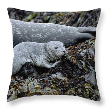 Harbor Seal Pup Resting Throw Pillow by Suzi Eszterhas