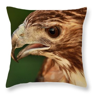 Hawk Eyes Throw Pillow by Dan Sproul