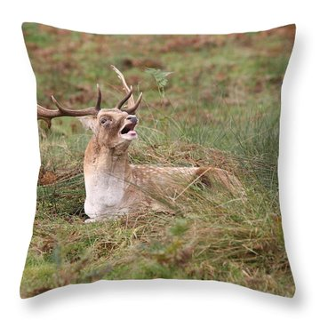 Hear Me Roar Throw Pillow by Mark Severn