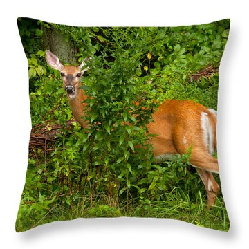 Hey I Eating Here Throw Pillow by Karol Livote