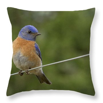 High Wire Throw Pillow by Jean Noren