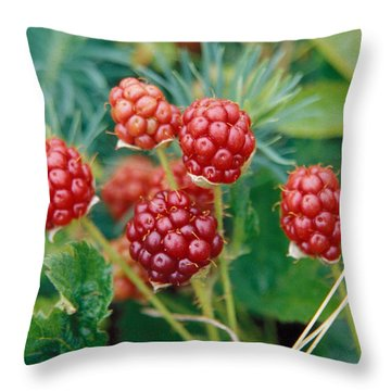 Highbush Blackberry Rubus Allegheniensis Grows Wild In Old Fields And At Roadsides Throw Pillow by Anonymous