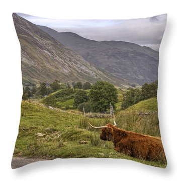 Highland Cow In Scotland Throw Pillow by Jason Politte