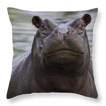Hippopotamus Bull Khwai River Botswana Throw Pillow by Vincent Grafhorst