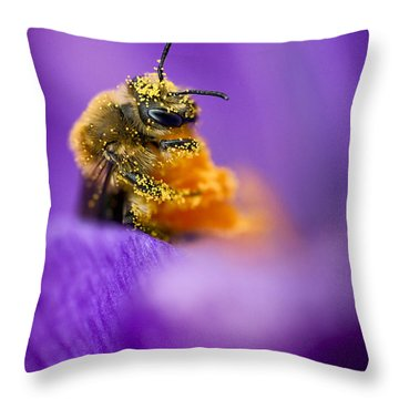 Honeybee Pollinating Crocus Flower Throw Pillow by Adam Romanowicz
