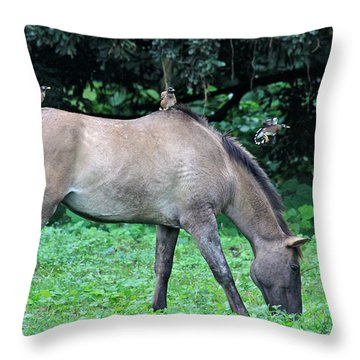Horse And Three Myna Birds Throw Pillow by Karon Melillo DeVega