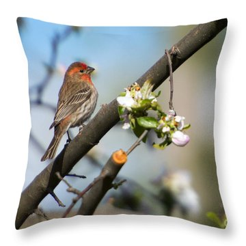 House Finch Throw Pillow by Mike Dawson