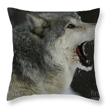 Howling Gray Wolf  Throw Pillow by Inspired Nature Photography Fine Art Photography