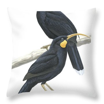 Huia Throw Pillow by Anonymous