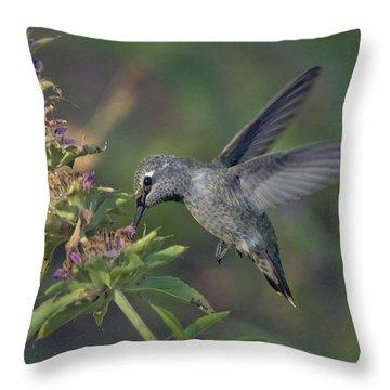 Hummingbird In The Morning Light Throw Pillow by Saija  Lehtonen