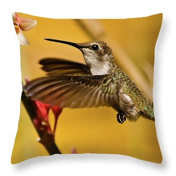 Hummingbird Throw Pillow by Robert Bales