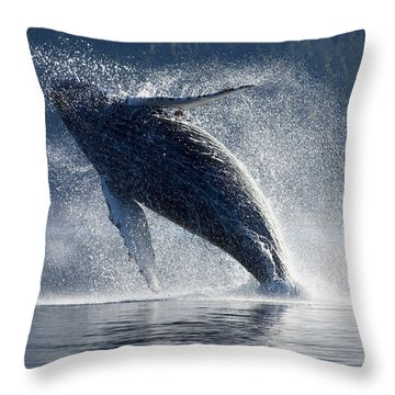 Humpback Whale Breaching In The Waters Throw Pillow by John Hyde