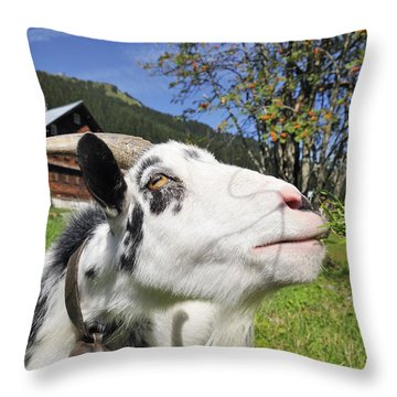 Hungry Goat Throw Pillow by Matthias Hauser