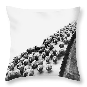 Hyde Park Sheep Flock Throw Pillow by Underwood Archives