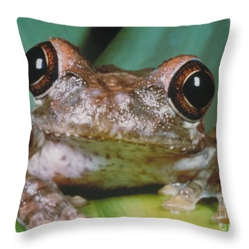 Hyla Vasta Tree Frog Throw Pillow by Jeff Lepore