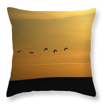 Ibis Sunrise Throw Pillow by Ernie Echols