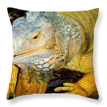 Iggy Throw Pillow by Carey Chen