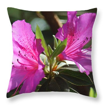 In Full Bloom Throw Pillow by Suzanne Gaff
