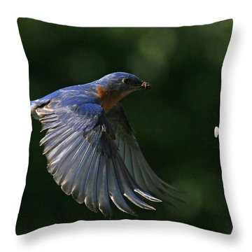 Incoming Throw Pillow by Douglas Stucky