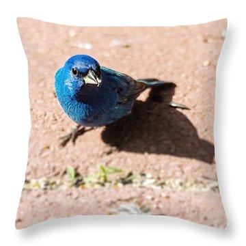 Indigo Bunting Throw Pillow by Jon Woodhams