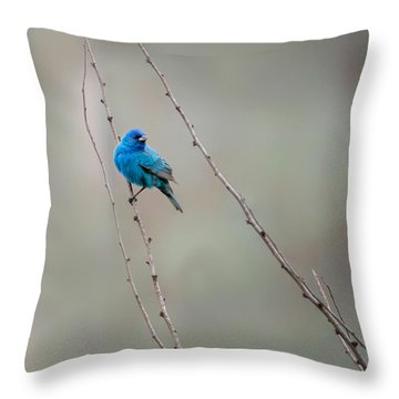 Indigo Bunting Square Throw Pillow by Bill Wakeley