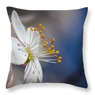 Into The Sun Throw Pillow by Andreas Levi