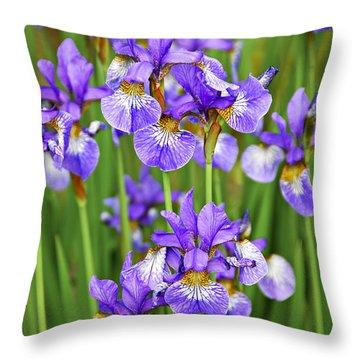 Irises Throw Pillow by Elena Elisseeva