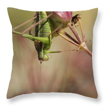 Isophya Savignyi Bush Cricket Throw Pillow by Alon Meir