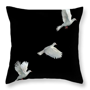 Java Dove In Flight Throw Pillow by Stephen Dalton