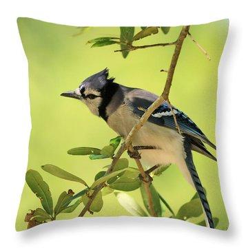 Jay In Nature Throw Pillow by Deborah Benoit