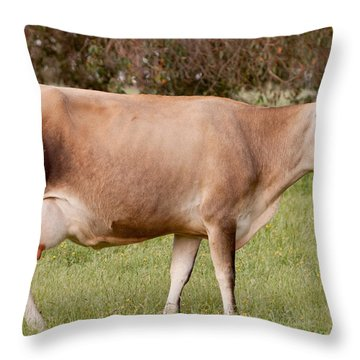 Jersey Cow In Pasture Throw Pillow by Michelle Wrighton