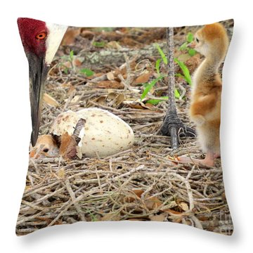 Just Hatching Throw Pillow by Zina Stromberg