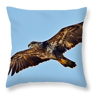 Juvenile Bald Eagle In Flight Close Up Throw Pillow by Jeff at JSJ Photography