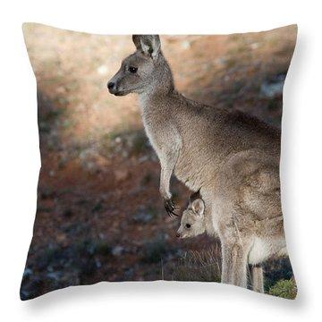 Kangaroo And Joey Throw Pillow by Steven Ralser