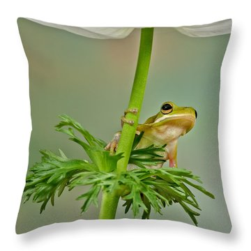 Kermits Canopy Throw Pillow by Susan Candelario