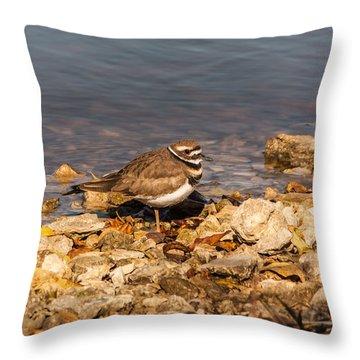 Kildeer On The Rocks Throw Pillow by Robert Frederick