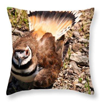Killdeer On Its Nest Throw Pillow by Chris Flees