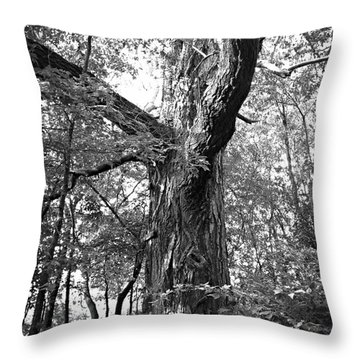 King Of The Timber Bw Throw Pillow by Garren Zanker