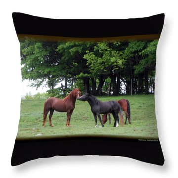 Kissing Cousins- The Paso Fino Stallions Throw Pillow by Patricia Keller