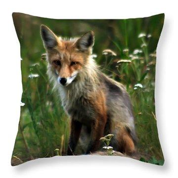 Kit Red Fox Throw Pillow by Robert Bales