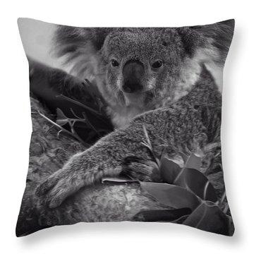 Koala Throw Pillow by Chris Flees