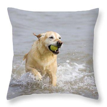 Labrador-mix Retrieving Ball Throw Pillow by Geoff du Feu