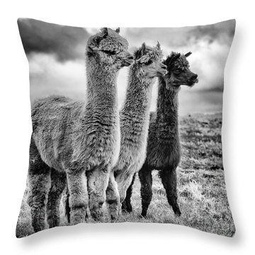 Lama Lineup Throw Pillow by John Farnan