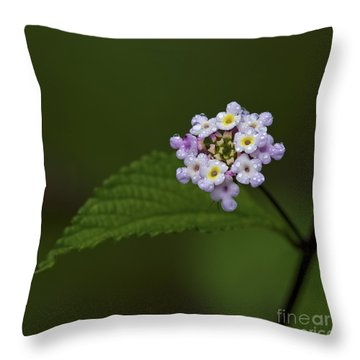 Lantana Ballet.. Throw Pillow by Nina Stavlund